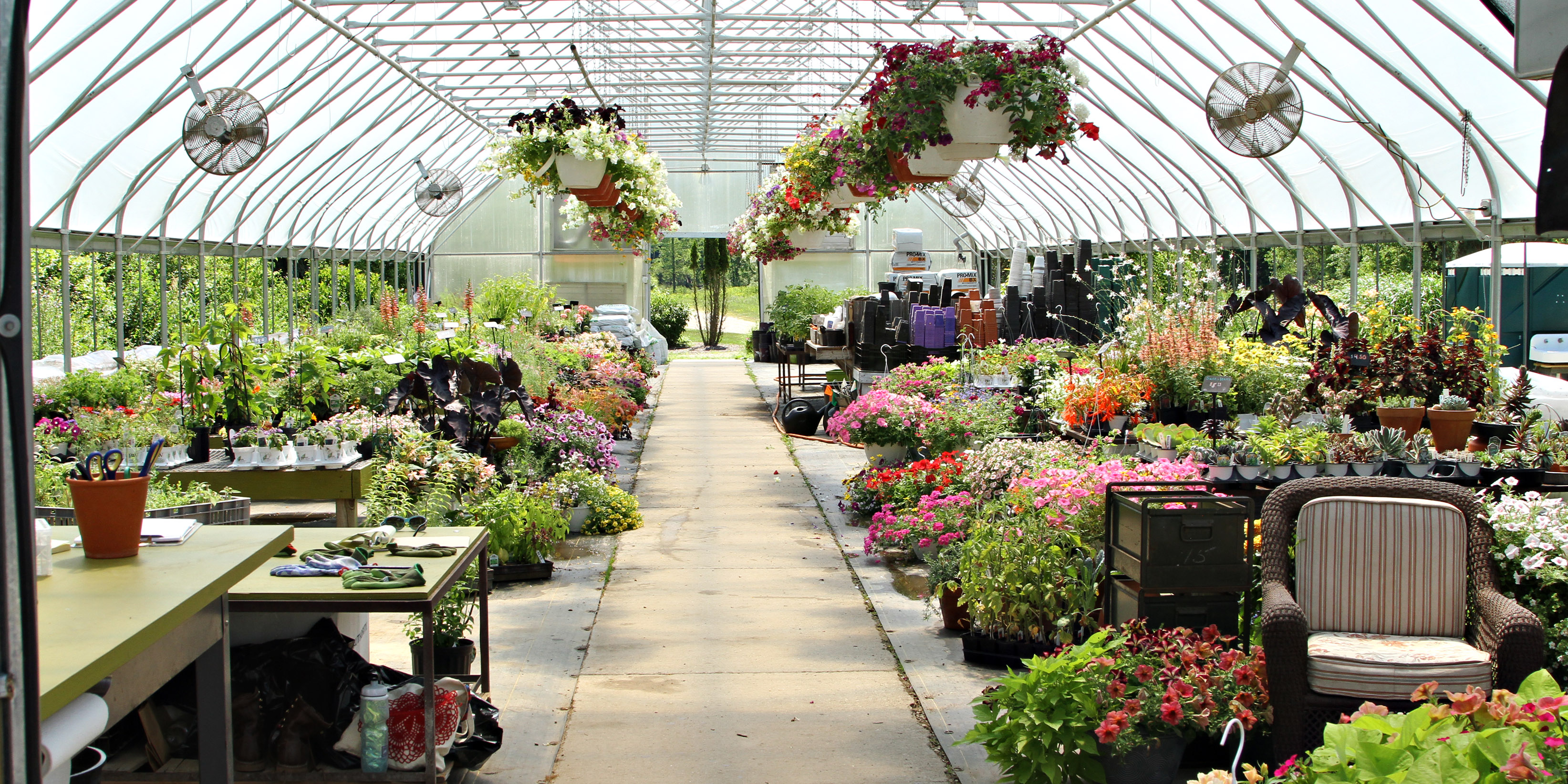 4 Wisconsin Greenhouses to Visit This Spring