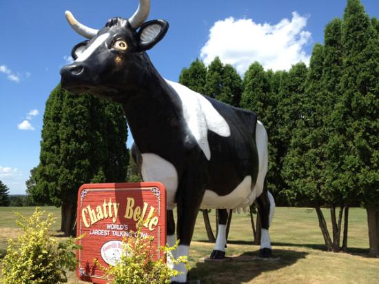 Chatty Belle, The Talking Cow