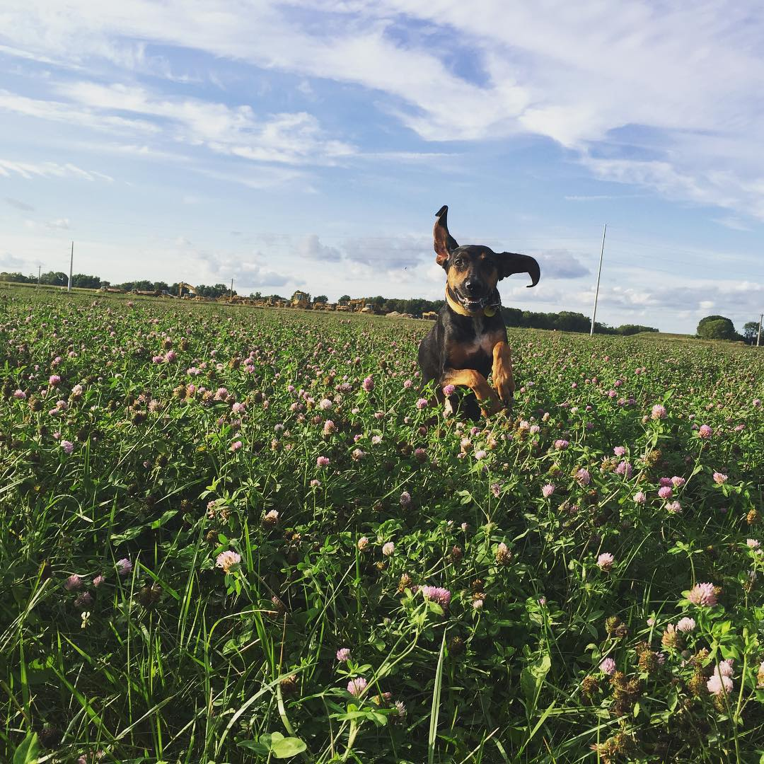 4 Dog-Friendly Destinations in Wisconsin