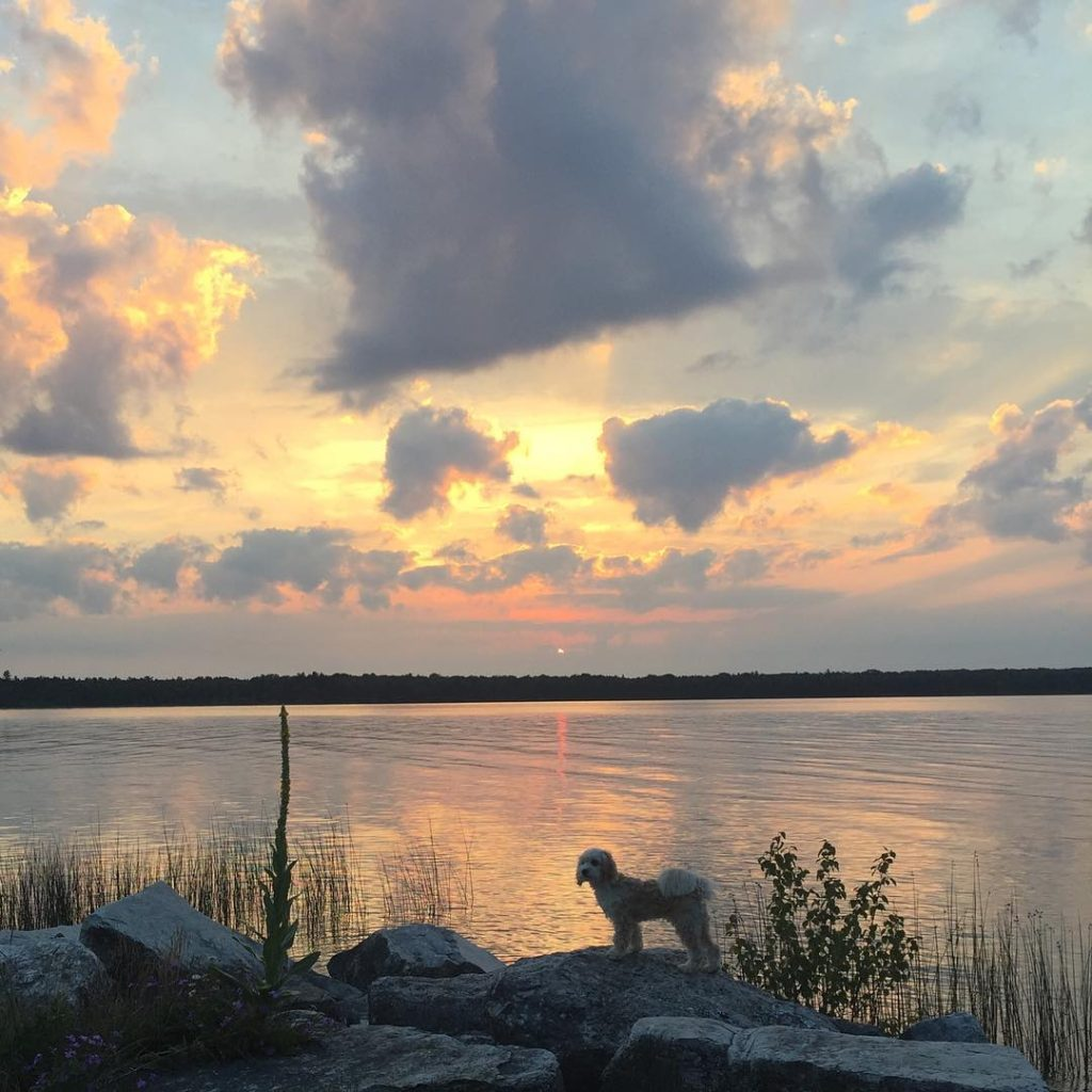 4 Dog Friendly Destinations In Wisconsin The Bobber