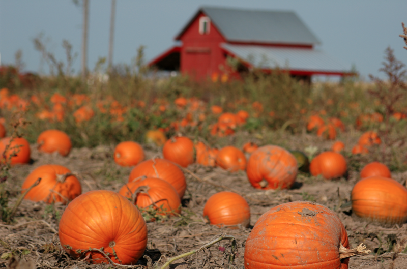 10 of Wisconsin's Best Fall Farms, Apple Orchards & Pumpkin Patches