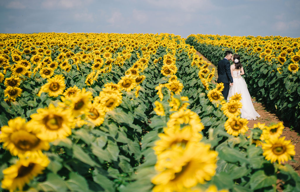 8 Things You Never Knew About Sunflowers And Where To Find Them In