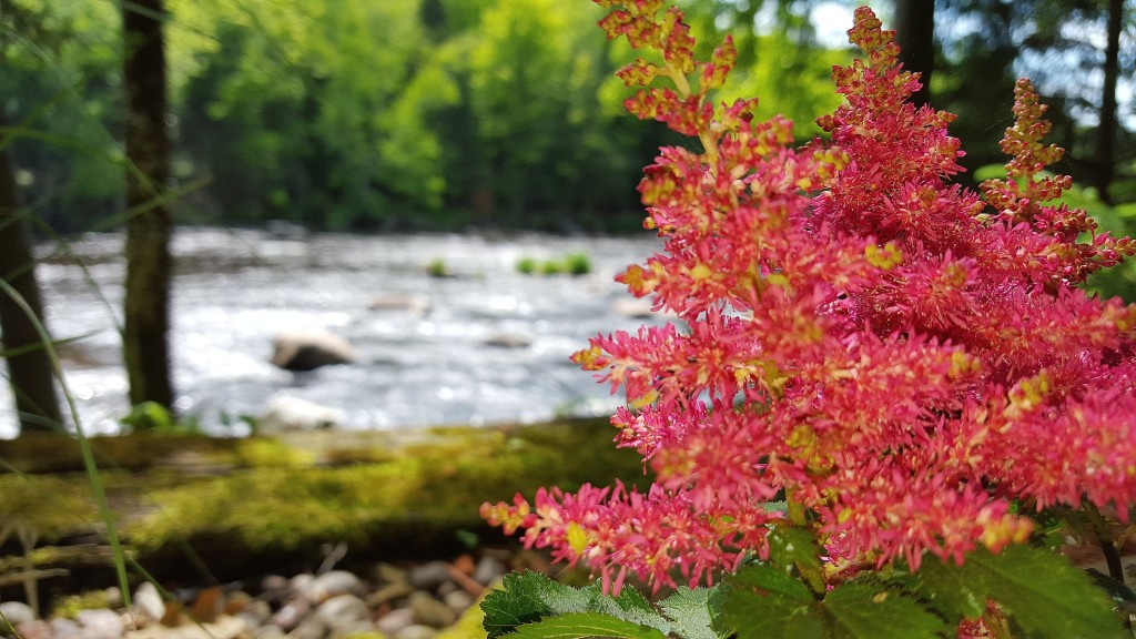 10 Things to Do As You're Winding Down the Wolf River