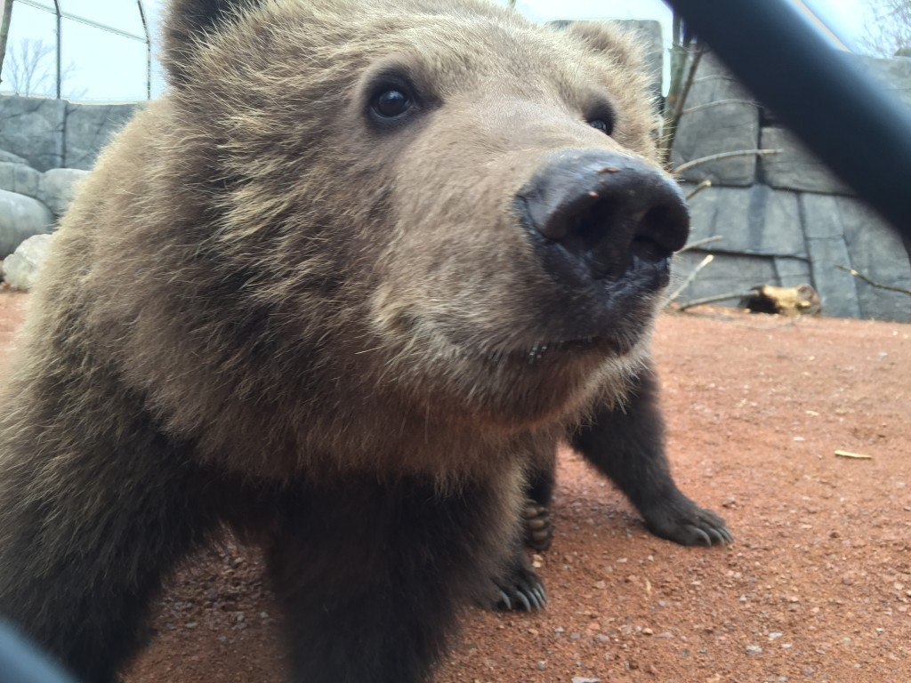 Munsey and Boda check out the gopros while the Discover Wisconsin crew filmed at Wildwood Zoo